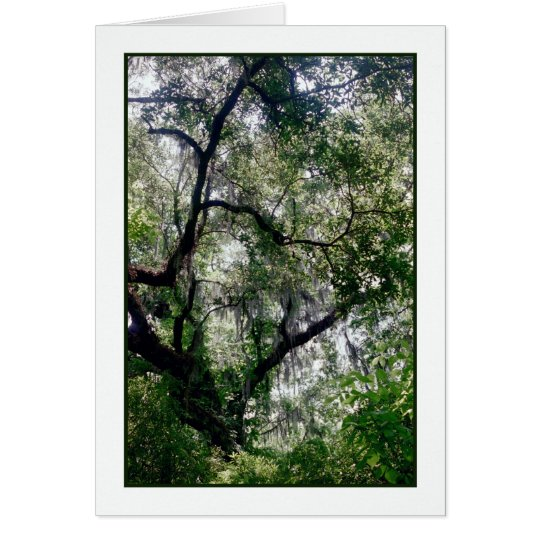Moss Canopy Greeting Card