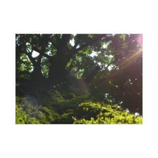 Moss Canopy Wall Canvas