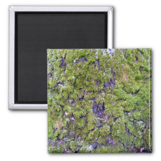 Moss covered land magnet