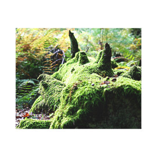 Moss Covered Log Canvas Print