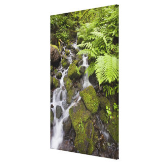 Moss covered rocks with blurred water and ferns stretched canvas prints