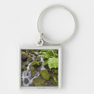 Moss covered rocks with blurred water and ferns keychain