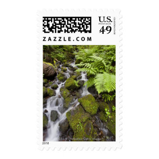 Moss covered rocks with blurred water and ferns stamp