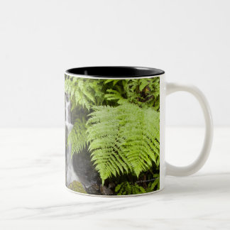 Moss covered rocks with blurred water and ferns Two-Tone coffee mug