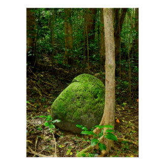 Moss-covered Stone Print