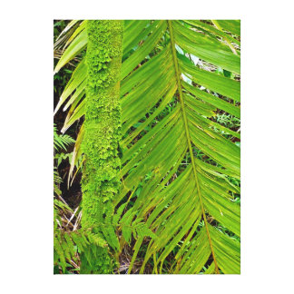Moss-covered Tree Trunk in Rain Forest Canvas Print