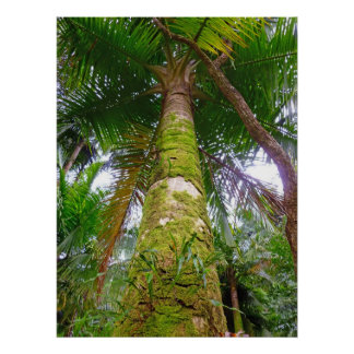 Moss-covered Tree Trunk in Rain Forest Poster