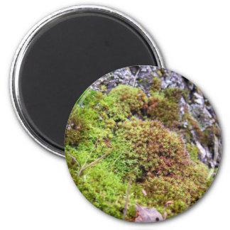 Moss & Granite 2 Inch Round Magnet