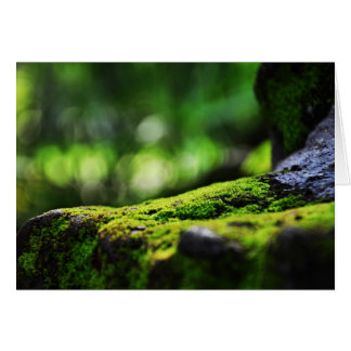 Moss growing on rocks Greeting Cards