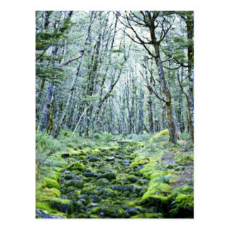 Moss In A Dry Stream Bed, Nelson Lakes National Pa Postcard