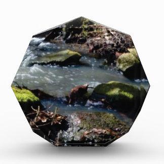 moss in the creek award