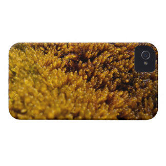 Moss Inspection Case-Mate iPhone 4 Case