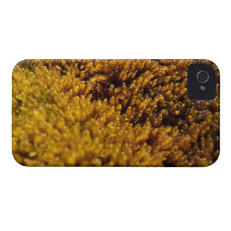 Moss Inspection iPhone 4 Case-Mate Case