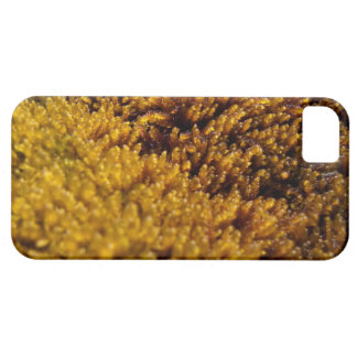 Moss Inspection iPhone SE/5/5s Case