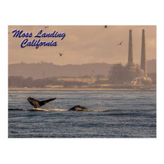 Moss Landing, California Postcard