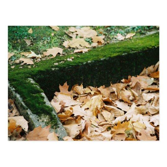 Moss & Leaves Postcard