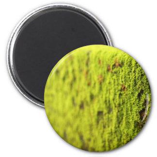 Moss Refrigerator Magnets