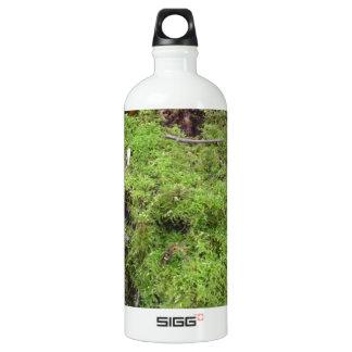 Moss on a Tree trunk Aluminum Water Bottle