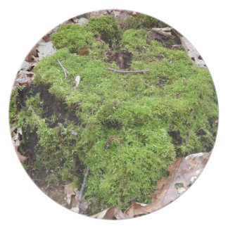 Moss on a Tree trunk Dinner Plates