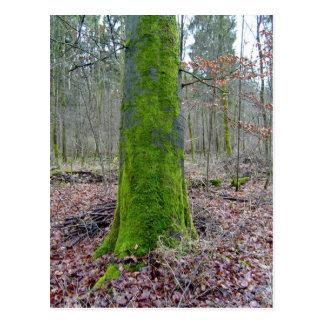 Moss on a Tree Trunk Postcard