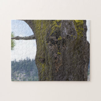 Moss On An Old Tree Puzzle