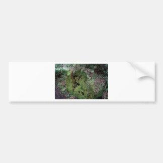 Moss on fallen redwood car bumper sticker