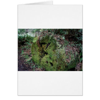 Moss on fallen redwood greeting cards