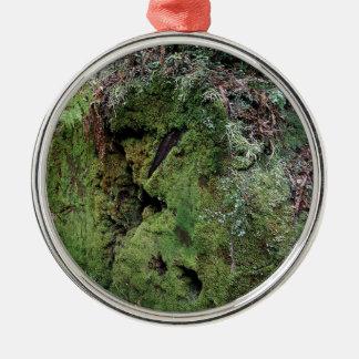 Moss on fallen redwood christmas tree ornaments
