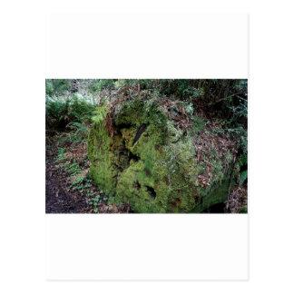 Moss on fallen redwood post card