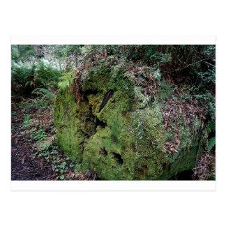 Moss on fallen redwood postcards