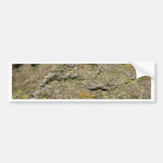 Moss on Rock Car Bumper Sticker