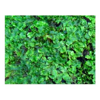 moss on rock postcard