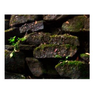Moss on Rock Wall Postcard