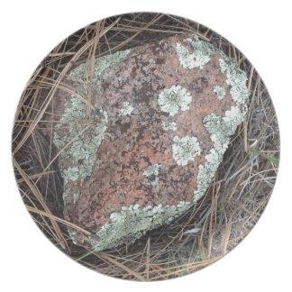 Moss rock lichen plate
