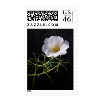 """Moss rose"" postage stamp"