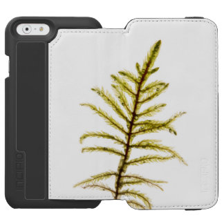 Moss sprout iPhone 6/6s wallet case