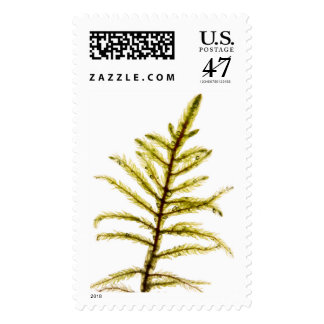 Moss sprout postage