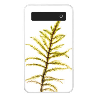 Moss sprout power bank