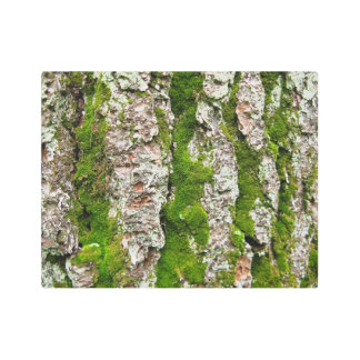 Moss Stripes in Pine Tree Bark Metal Photo Print