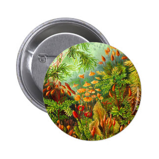 Mosses Button