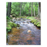 Mossy Acadian Stream Photograph