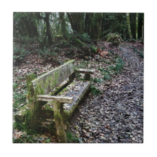 Mossy Bench Nature Trail in Olympic National Park Tile