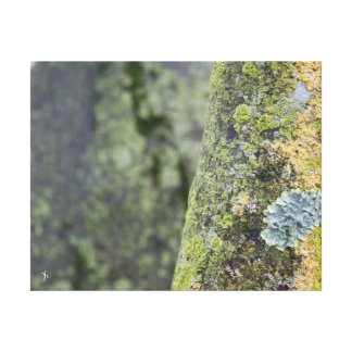 Mossy Gallery Wrap Canvas