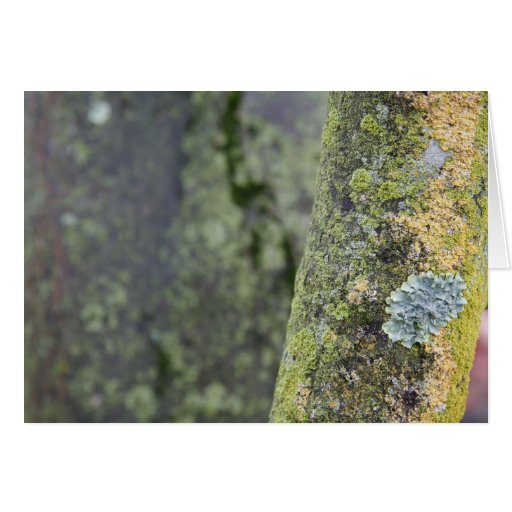 Mossy Cards