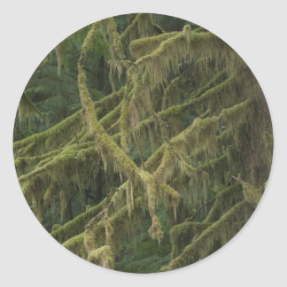 Mossy Forest Oregon Elk River Classic Round Sticker