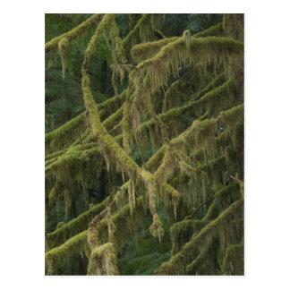 Mossy Forest Oregon Elk River Postcard