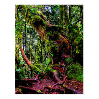 Mossy Forest Postcard