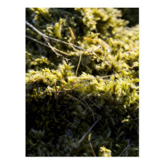 Mossy green post cards