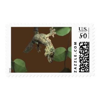 Mossy Leaf-Tailed Gecko – Master of Disguise Postage