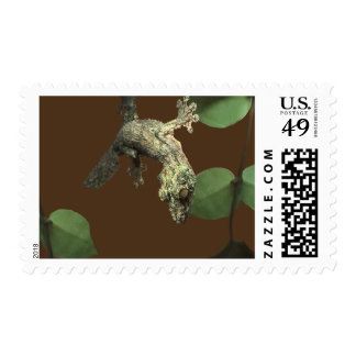Mossy Leaf-Tailed Gecko – Master of Disguise Postage Stamp